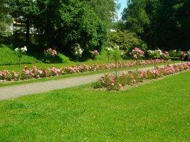 Plantation de rosiers