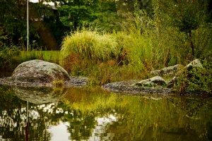 aménager des étangs